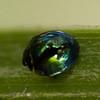 9354-9362 Mapua Steelblue Ladybird