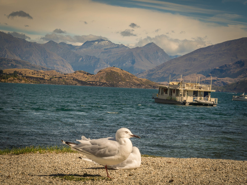 Protector of Lake Wanaka