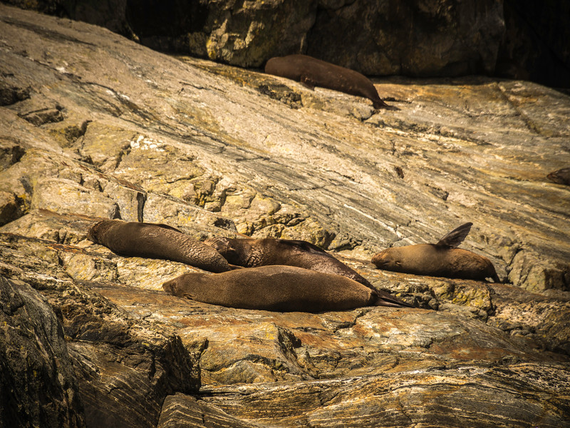 Sun Tanning Seals