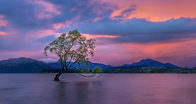 Waneka Tree