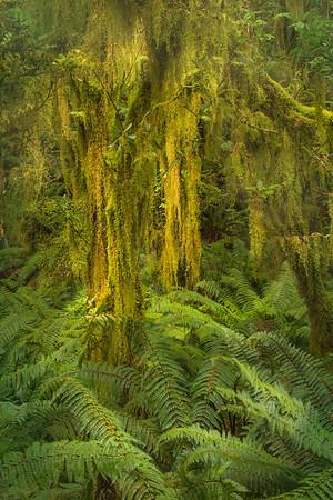 Milford Sound, Cruise, Milford Track,  Routeburn Track, Te Anau,