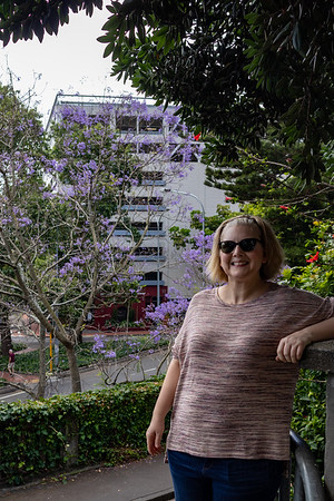 K and the Jacaranda.
