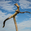 Driftwood sculpture, Hotikita beach, West Coast South Island New Zealand