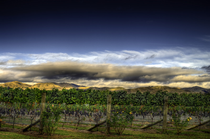 Dusk at the vineyard, Martinborough, North Island