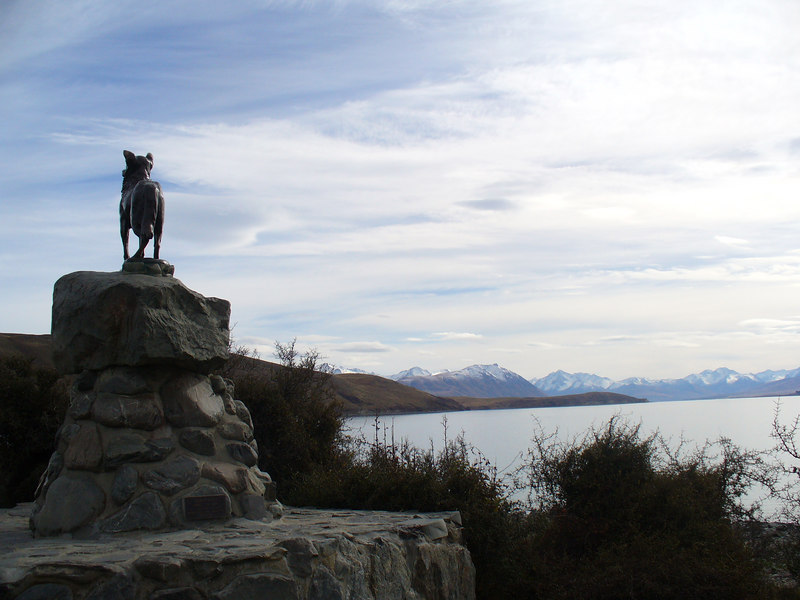The little shepherd, Tekapo