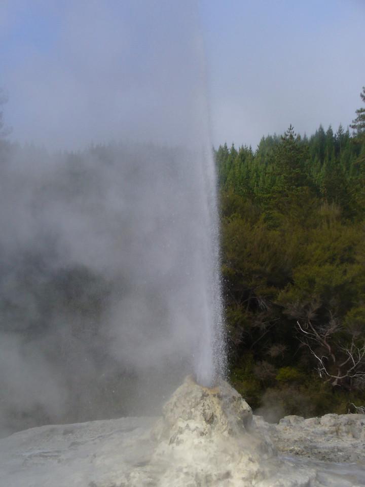 Lady Knox geyser