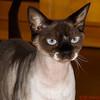 Callie Art Deco Kitty