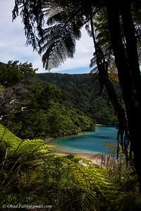 Quine Charlotte Trail New Zealand