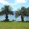 Palm trees line the beach at Picton, the port of arrival for the ferries from Wellington.