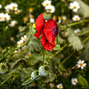 IMG_2112a poppy