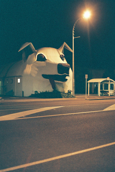 Giant Dog Store