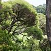 NewZealand_Wellington_KwaiLam2013-00419
