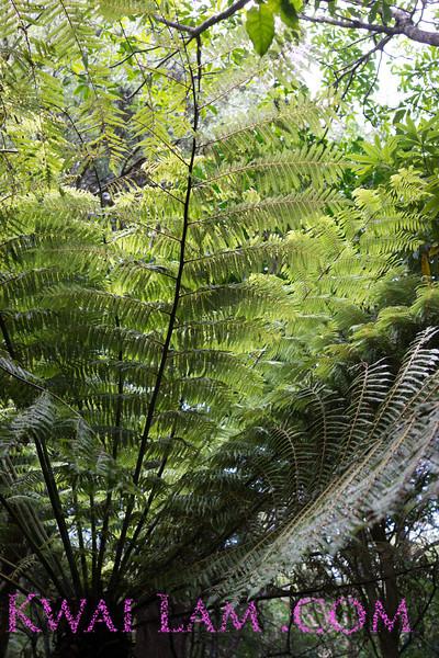 NewZealand_Wellington_KwaiLam2013-00439