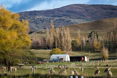 Farm along the Wine Trail