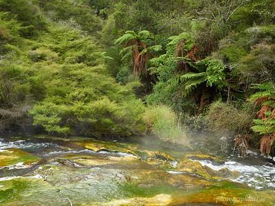 Hot stream outflow of Frying Pan Lake, Waimangu Valley