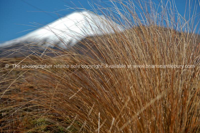 Mount Ngauruhoe  beyond the tussock grass.