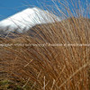 Mount Ngauruhoe  beyond the tussock grass.