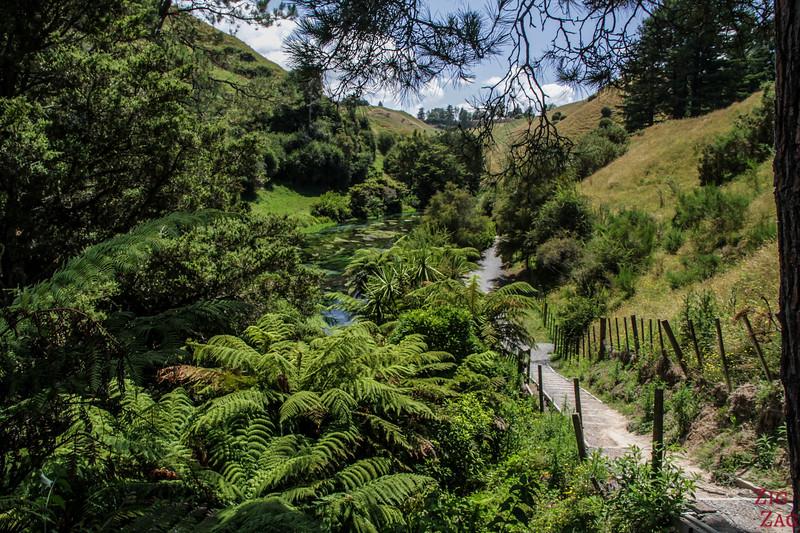 Te Waihou Walkway Nouvelle Zélande 2