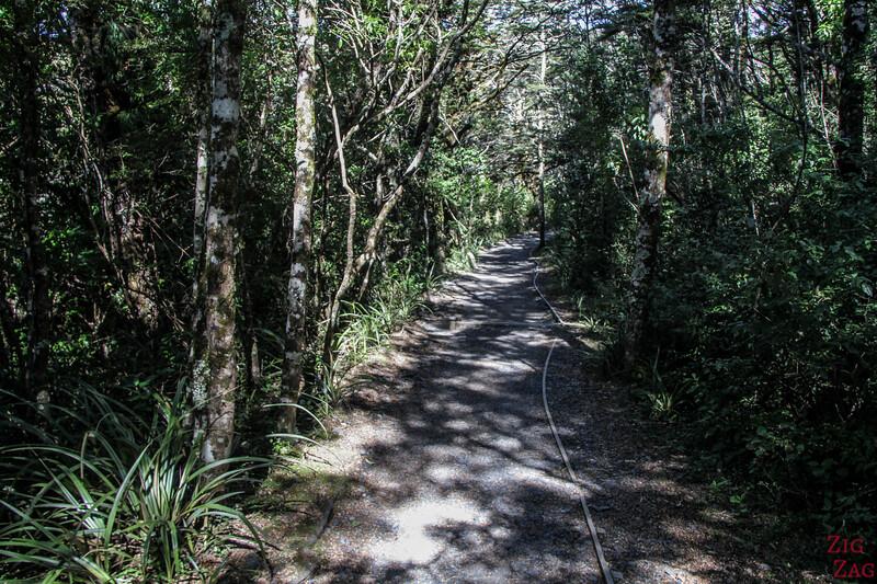 Sentier supérieur des chutes Taranaki - foret