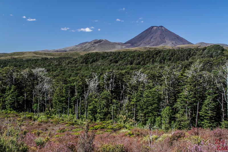 Sentier supérieur des chutes Taranaki - Vues des monts Ngauruhoe