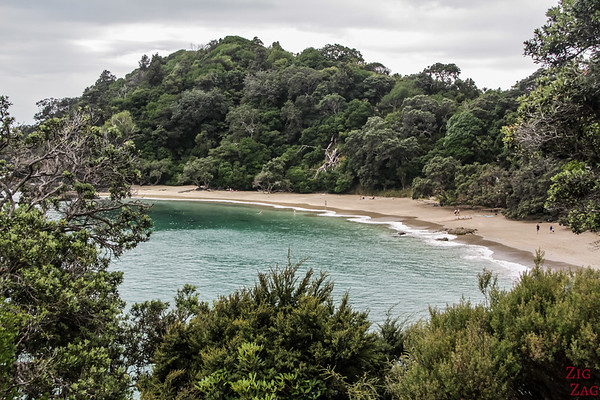 North Island New Zealand Itinerary 7 days - Whale Bay