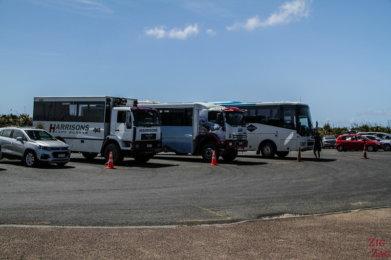 Cape Reinga tour bus and Dune riders