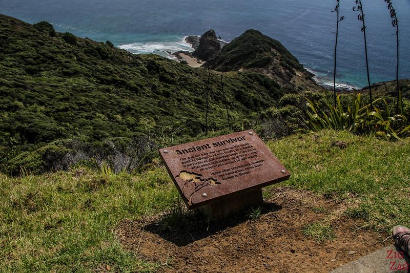 The Cape Reinga lighthouse walk - Pohutukawa tree
