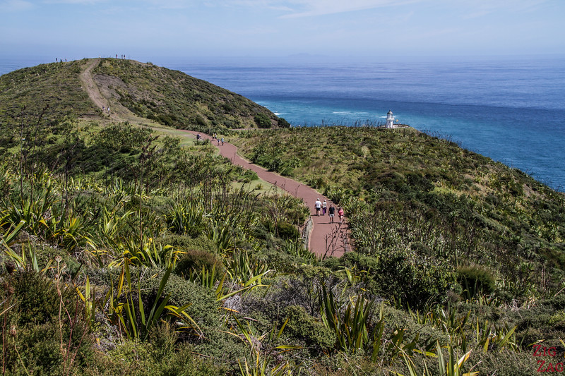 things to do at Cape Reinga - lighthouse walk 2