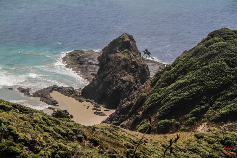 The Cape Reinga lighthouse walk - Pohutukawa tree 2