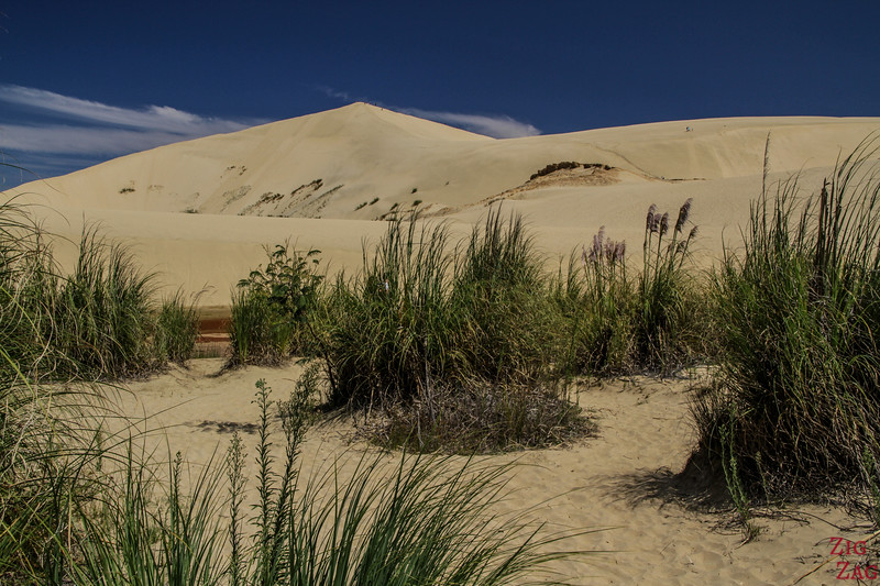 Coastal landscapes in New Zealand - Te Paki sand dunes
