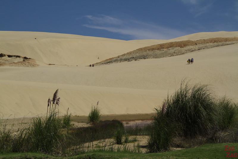 Te Paki Sand Dunes sandboarding