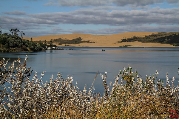North Island New Zealand Itinerary 7 days - Hokianga 3