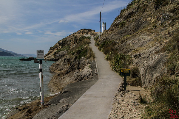 Marche du phare - Castlepoint Lighthouse Walk 2