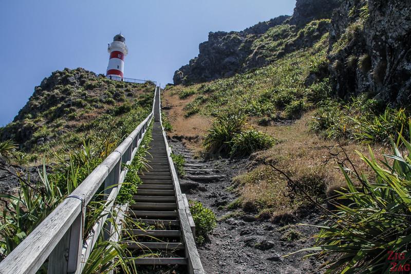 Phare du Cap Palliser escalier 2