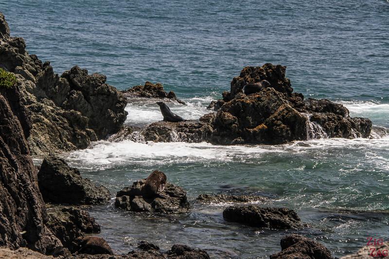 Colonie d'otaries au Cap Palliser - Matakitaki-a-kupe Reserve 1
