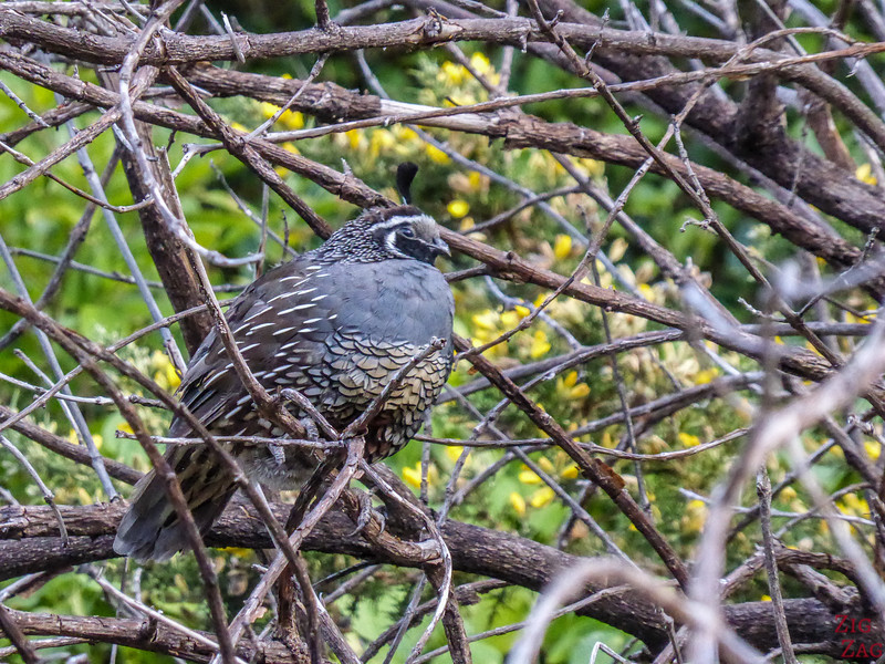Coromandel peninsula forest bird