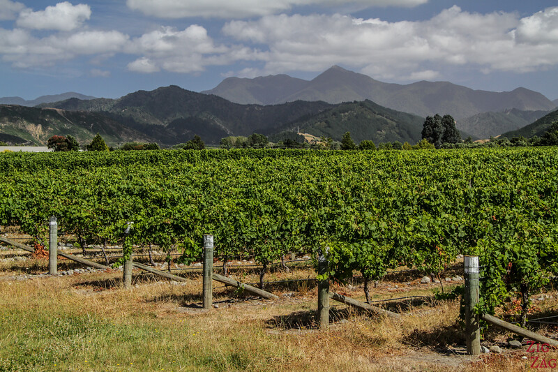 Best areas to stay in New Zealand destinations - vineyards