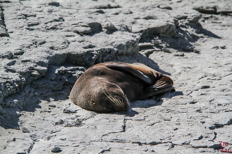 Point Kean seal