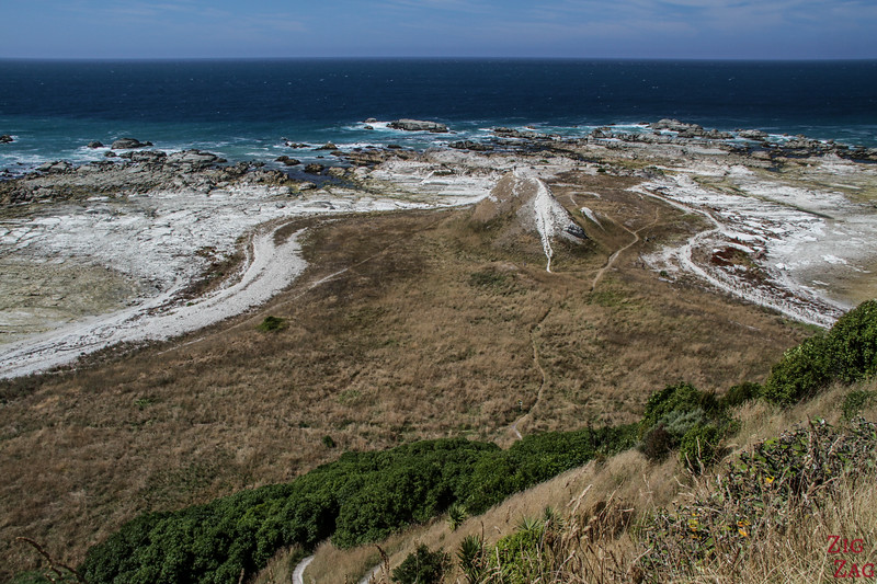 Kaikoura peninsula walkway to Whalers Bay 4