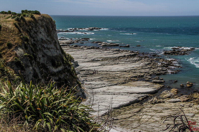 2Kaikoura peninsula walkway to Whalers Bay 2