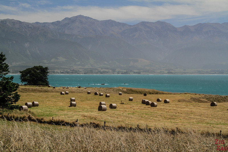 Kaikoura peninsula walkway to Whalers Bay 1