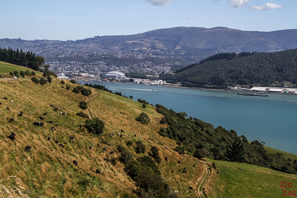 Where to stay in Dunedin 2