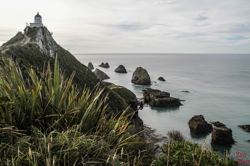 Nugget Point Lighthouse Catlins 3