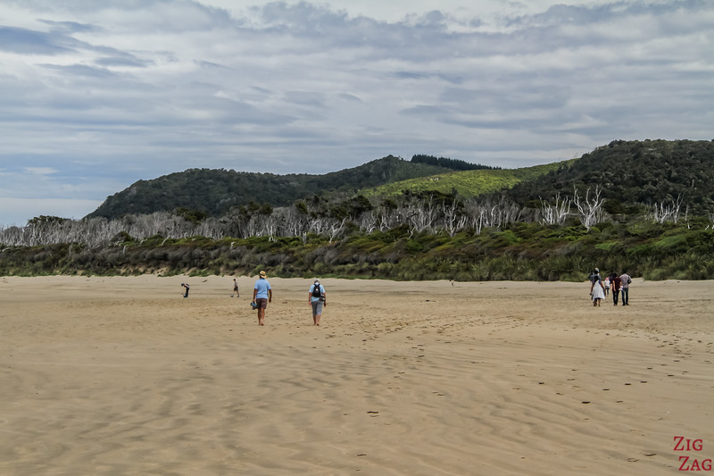 Cathedral Caves Waipati Beach 4
