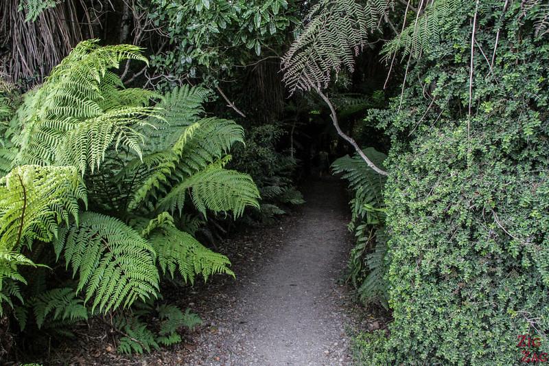 Cathedral Caves Walk (Chaslands) - rando dans la forêt côtière 2