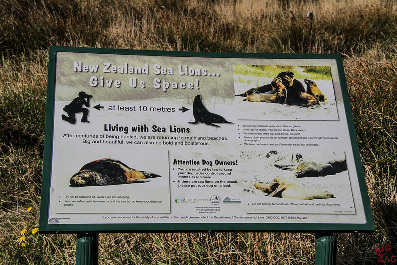 Waipapa point sea lions