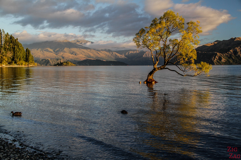 Best places to visit in the New Zealand South Island - Wanaka Tree