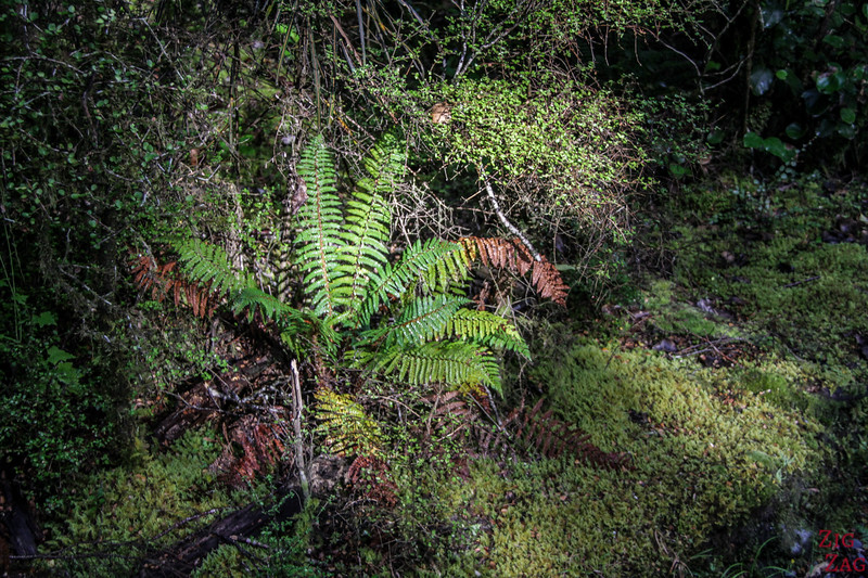 Forest walk to the Haast pass Blue pools 1