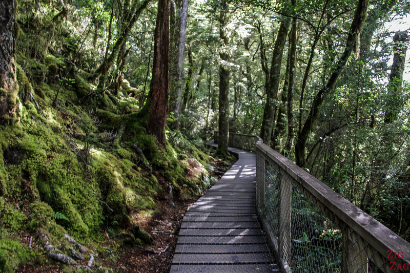 Forest walk to the Haast pass Blue pools 3
