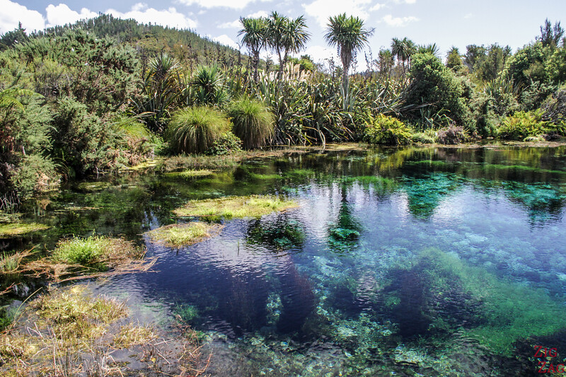 Pupu springs New Zealand
